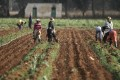 African governments are creating programmes to help entrepreneurs in the agribusiness supply chain grow. Photo: Reuters
