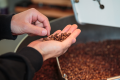 The Climate Institute of Australia says half of the world's area that's deemed suitable for growing coffee will be lost by 2050 if climate change remains unchecked. Photo: Christopher Jue/Getty Images