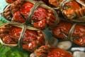 Everyone's favorite hirsute crustaceans are back!