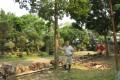 Tree surgeon Sammy Au