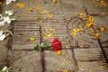 Flowers lay on the spot where Bangladeshi blogger Avijit Roy was killed in a street in Dhaka in February. Photo: EPA
