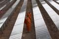 Thai Buddhist monks walk in the Sai Sena solar park at Ayutthaya, near Bangkok. Sharing technology and know-how will accelerate the journey towards a greener Asia. Photo: EPA