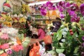 Lunar New Year flowers and plants on sale in Causeway Bay. Photos: Robin Fall