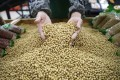 China is the biggest importer of GMO soybeans. Photo: Reuters