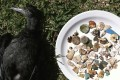 A still from Craig Leeson's film, showing the pieces of plastic found inside one dead seabird. Leeson's documentary is exploring the impact plastic is having on our oceans and marine life.