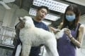 Trainer Gary Ho with Abi (right) and one of his pooches. Photo: David Wong