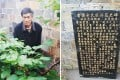 The plant allegedly damaged and a plaque telling its story. Photo: Qq.com