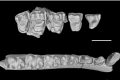 Scientists analysed the fossils of six new species of early primates found in southwest China. Photo: SCMP Pictures