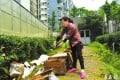 The wife of the beekeeper, Wang, inspects the damage in their garden. Photo: West China City Daily