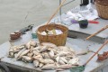 Some of the dead fish pulled from the water in Nanjing. Photo: Qq.com