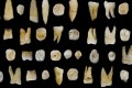 Human teeth found in Fuyan cave in Hunan province helped rewrite the history of early man. Photo: Reuters