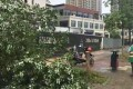 This camphor tree was felled to remove a bicycle attached to it. Photo: SCMP Pictures