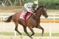 Super Jockey and Karis Teetan in Seoul. Photos: Lo Chun Kit