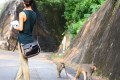 Monkeys in Kam Shan Country Park. Picture: SCMP