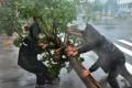 Investors fear the approach of Typhoon Haima may force Hong Kong's stock markets to close tomorrow. Photo: Xinhua