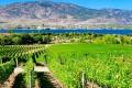 Nk'Mip Cellars' vineyards in the Okanagan Valley, British Columbia. Pictures: Alamy