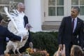US President Barack Obama pardons Tater the National Thanksgiving Turkey during a ceremony in the Rose Garden of the White House on Wednesday. Photo: EPA