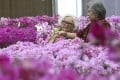 Customers choose blossoms at a flower farm in Kam Tin in Yuen Long. Photo: Felix Wong