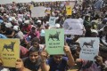 Protestors hold placards demanding jallikattu, a traditional bull-taming sport banned by India's top court, be allowed to resume unhindered as thousands gather at the Marina beach in Chennai, India. Photo: AP