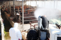 Authorities in Gwangju spray disinfectants at a cattle farm in Boeun, North Chungcheong Province, Monday, after a case of foot-and-mouth disease was confirmed there earlier that day. Photo: Yonhap