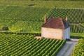 Vineyards in Gevrey-Chambertin, Burgundy, France.