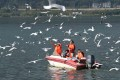 Tourists feed birds on the Dianchi lake in Kunming. Efforts to fight pollution are starting to pay off as the water quality of the lake was upgraded in January. Photo: Xinhua