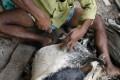 A Bangladeshi worker cuts raw animal hide inside a factory. Photo: AP
