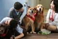 A volunteer (right) spends time with two students as part of Animals Asia Foundation's dog therapy programme. The Dr Dog programme arranges for volunteers to take their dogs to hospitals, homes for the elderly and schools for visits. Photo: Xiaomei Chen