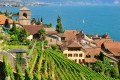 Saint-Saphorin in Lavaux in Switzerland's Vaud region on the shores of Lake Geneva, one of the prettiest wine-growing areas in the world. Photo: Alamy