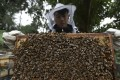 Maurise Tse at his family's ForMe Honey apiary in Tuen Mun. Pictures: Jonathan Wong