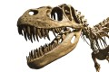 Dragon Teeth by Michael Crichton (published by Harper) is based on the real-life race for fossils between Othniel Charles Marsh and Edward Drinker Cope. Photo: Shutterstock