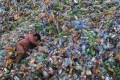 A labourer rests on piles of plastic bottles at a recycling centre in Zhejiang province. Photo: Reuters