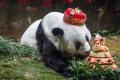 Basi is seen tucking in to a birthday cake on her 37th birthday in January 18. The world's oldest captive giant panda died on Wednesday at her home in southeastern China. Photo: AFP