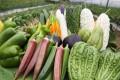 About 300 farms in Hong Kong follow organic standards. Photo: Nora Tam