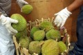There's good news for Malaysia's Durian exports. Photo: AFP