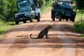 A leopard sits in the road in Yala National Park, Sri Lanka. Photo: Alamy