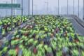 Runners take part in the Standard Chartered Hong Kong Marathon 2018. Photo: Felix Wong
