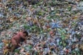 A labourer rests on piles of plastic bottles at a recycling centre in Jiaxing, Zhejiang province, in 2011. China's waste import ban last year has caused recycled plastic prices to drop drastically. Photo: Reuters