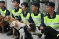 A group of the Customs and Excise Departments sniffer dogs. Another group will be trained to sniff cash. Photo: K.Y. Cheng