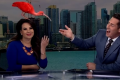 A scarlet ibis flew into the shot and landed on CBS News 8 co-anchor Nichelle Medina's head during a live TV broadcast on Monday. Photo: YouTube/Inside Edition