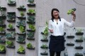Dr Daisy Tam Dic-sze with her vertical allotment at Hong Kong Baptist University's Kowloon Tong campus. Picture: Jonathan Wong