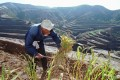 A farmer harvests millet from a hillside terrace in Houjiagou valley, in Shaanxi province. Picture: Associated Press