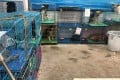 The dogs waiting to be rehomed at the shelter in Shenzhen. Photo: Natalie Phan