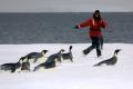 Niwa's Dr Kim Goetz with emperor penguins in Antarctica. Photo: Rod Dunbar/University of Auckland