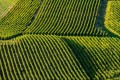 Vineyards in the Champagne region of France.