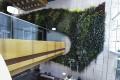 Patrick Blanc's vertical garden inside Hotel Icon in Tsim Sha Tsui. Photo: Felix Wong