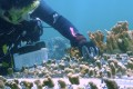 Coral reef engineering by the Hawaii Institute of Marine Biology. Photo: Handout