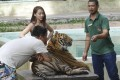 A handler prods a big cat with a stick as tourists pose for pictures at Tiger Kingdom. Picture: Red Door News Hong Kong