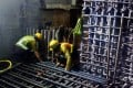Photos emerged of workers wearing the uniform of the main contractor, Leighton Contractors (Asia), cutting the bars badly. Photo: SCMP Pictures