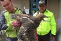 Ecuadorean police officers inspect a bird of prey. Photo: AP